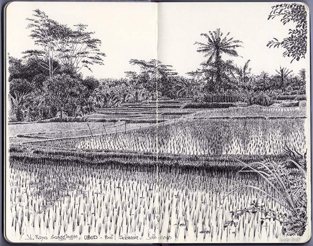 Arrozal en Ubud, Bali.